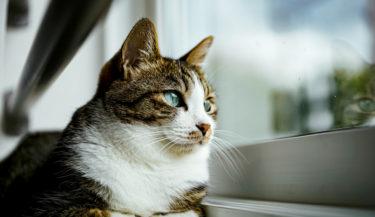 猫と一緒に暮らしたい