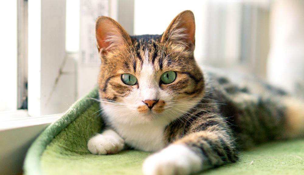 賃貸で猫と暮らす